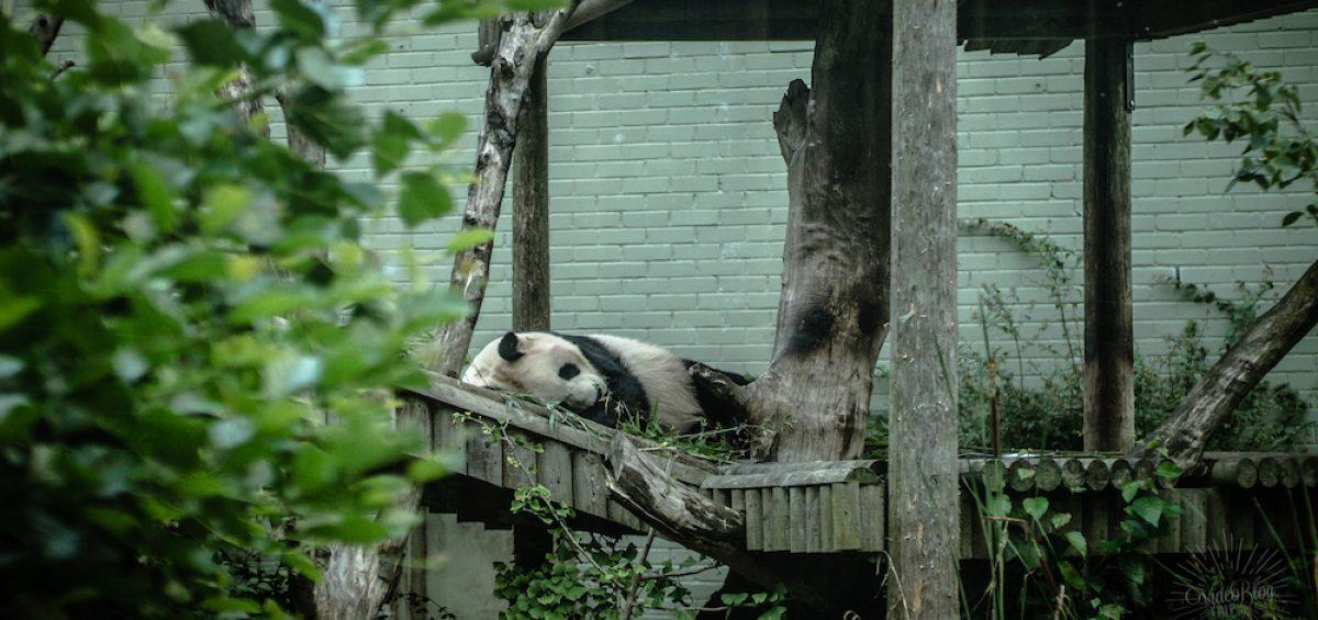 Écosse Jour 12 | Édimbourg Zoo RZSS - Le vidéo blog du voyage en famille | Journal photo & vidéo | VideoBlogTrip